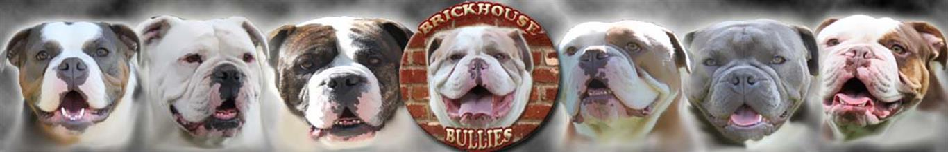 Brickhouse Bullies Olde English Bulldogges Puppies For Sale