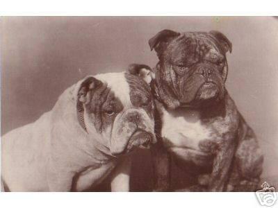History Of Oeb Olde English Bulldogge